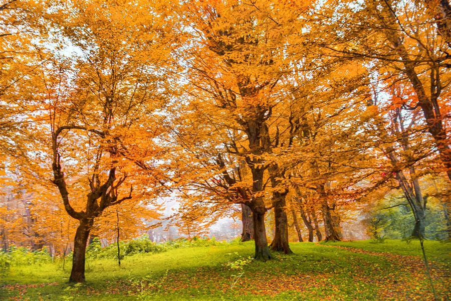 هنر عکاسی محفل عکاسی امیرسالار لاکچی جنگل دالیخانی Photo by me
