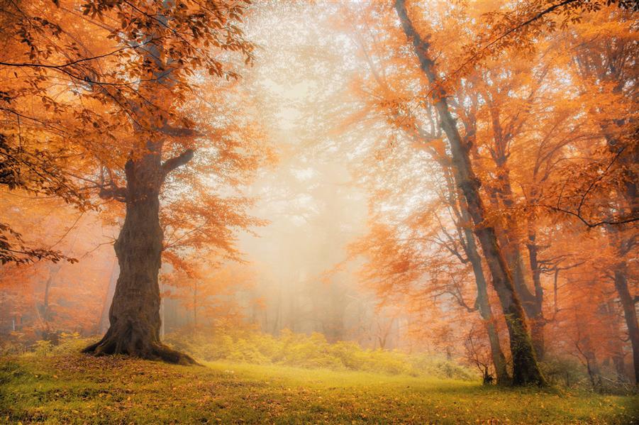 هنر عکاسی محفل عکاسی امیرسالار لاکچی جنگل دالیخانی رامسر (photo by me)