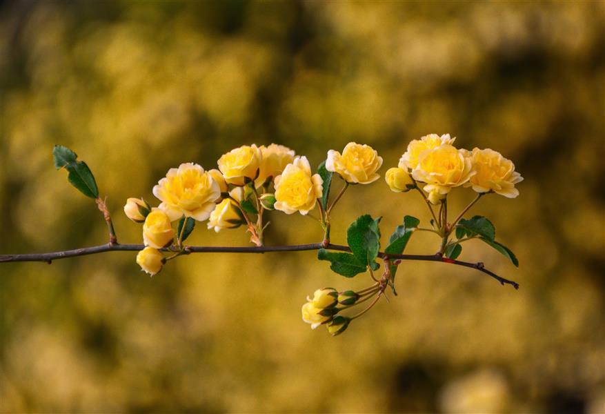 هنر عکاسی محفل عکاسی امیرسالار لاکچی گلها  Photo by me