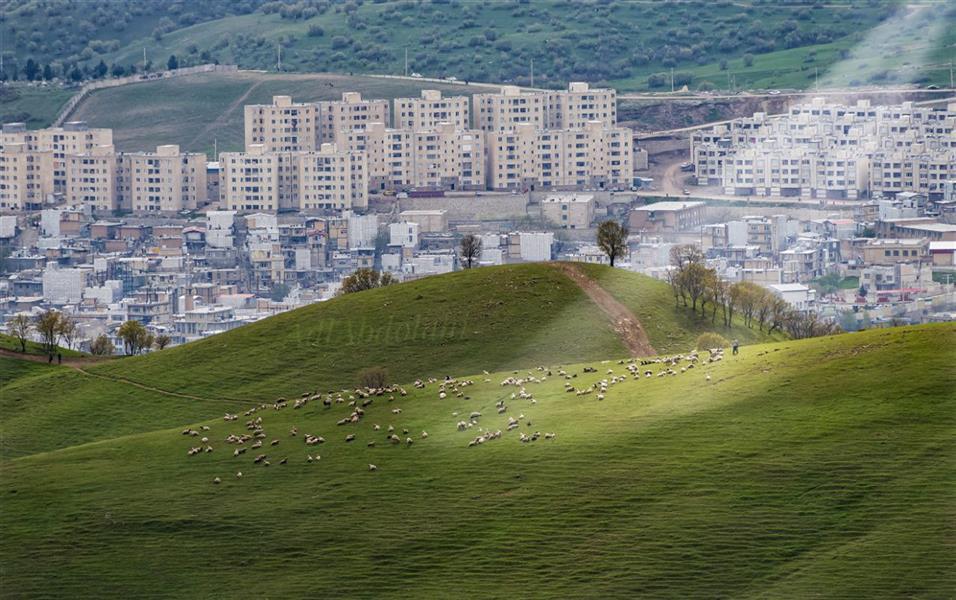 هنر عکاسی محفل عکاسی عادل عبدالهی شهرستان جوانرود