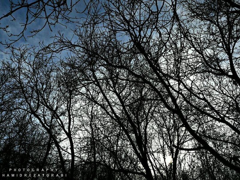 هنر عکاسی محفل عکاسی Hamid نجوای شاخه ها