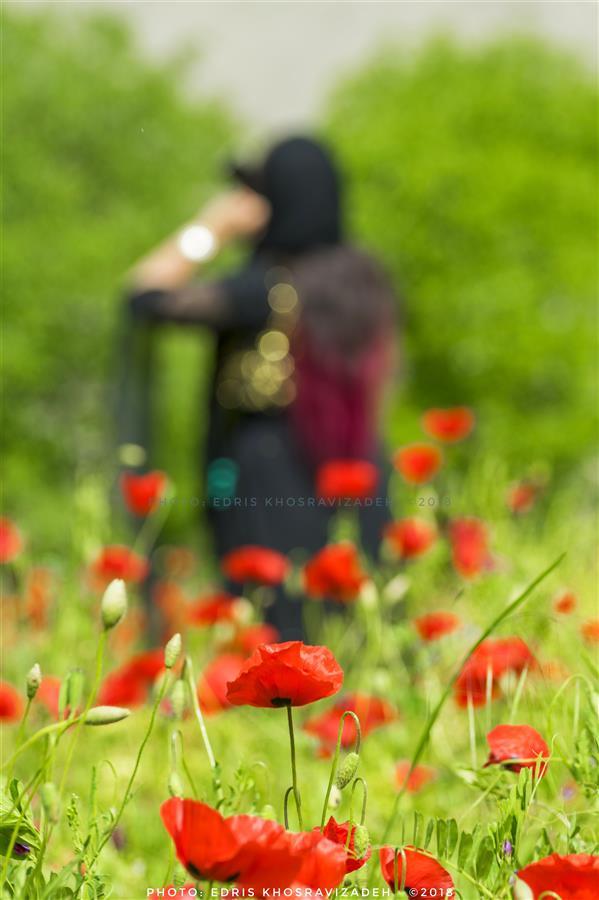 هنر عکاسی محفل عکاسی Edris Khosravizadeh از میان گلها...