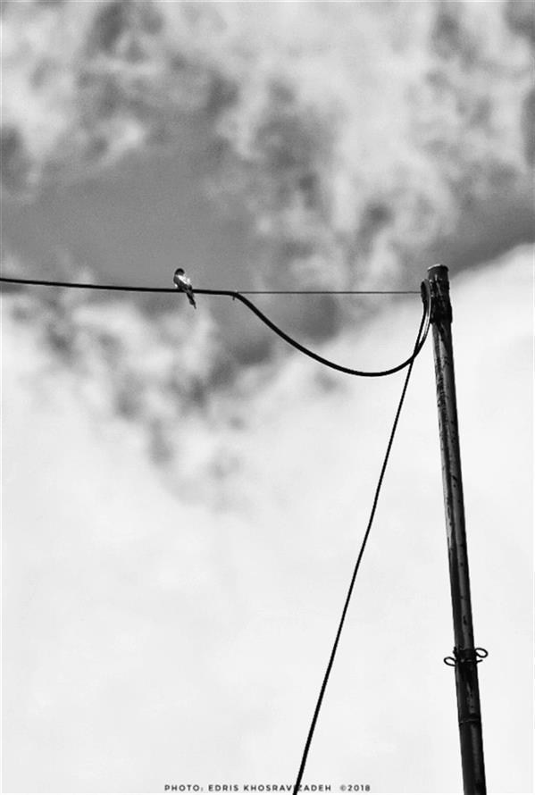 هنر عکاسی محفل عکاسی Edris Khosravizadeh #پرنده #سیاه_و_سفید