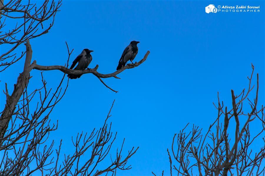 هنر عکاسی محفل عکاسی علیرضا ظهیری سروری در انتظار بهار