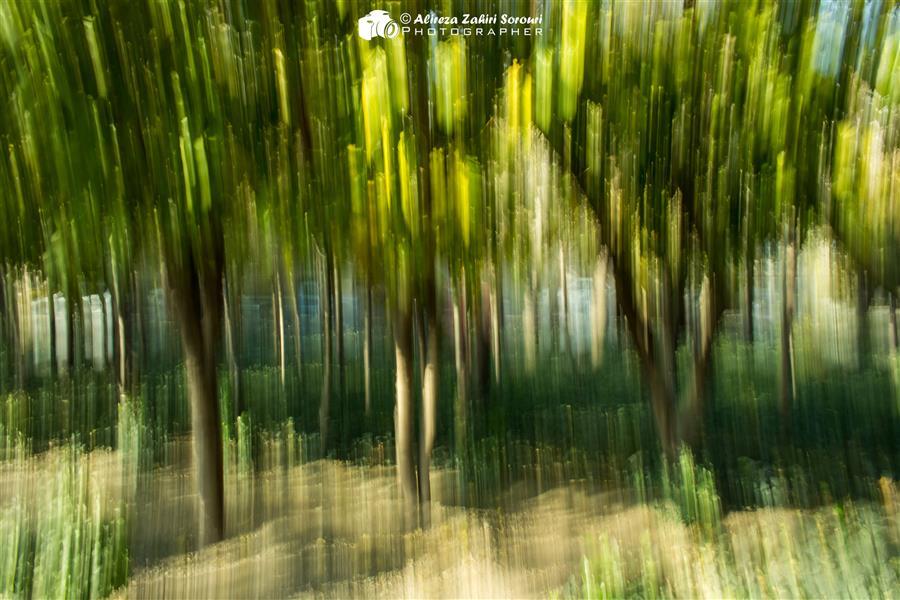 هنر عکاسی محفل عکاسی علیرضا ظهیری سروری تکنیک حرکت عمدی دوربین یا ICM