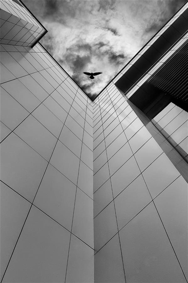 هنر عکاسی محفل عکاسی محمد دادستان Arch Perspective از بامی که پریدیم، پریدیم! #تقارن #مونوکروم #سیاه_و_سفید #پرنده #مینیمال #معماری #مفهومی