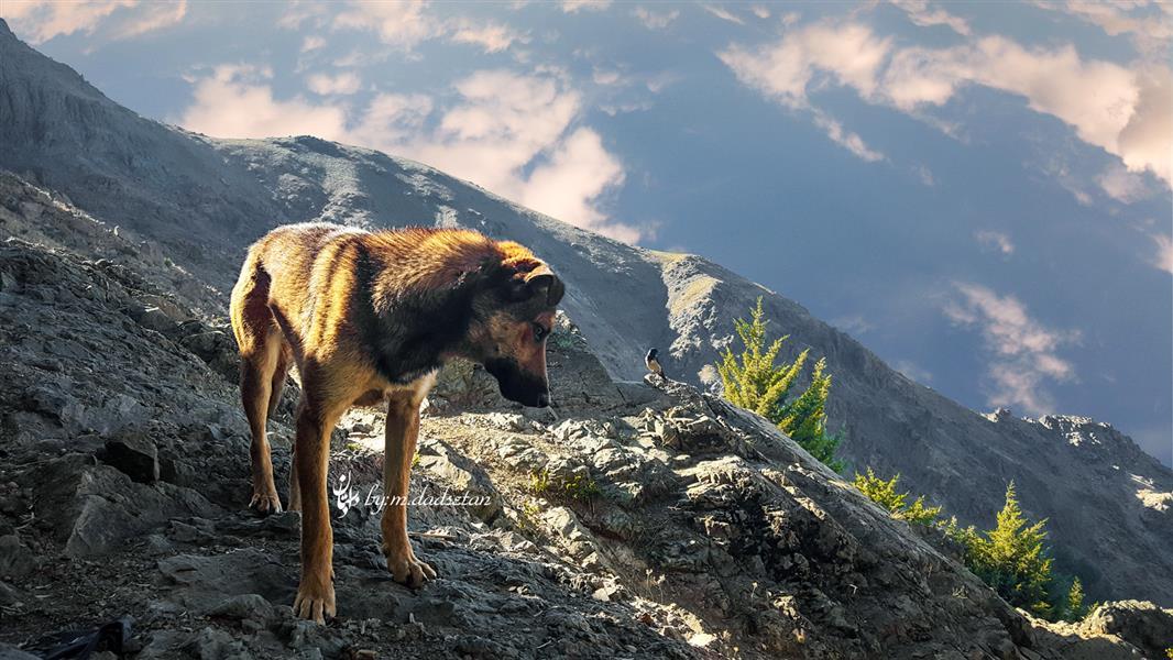 هنر عکاسی محفل عکاسی محمد دادستان عنوان: Dogy Depp مکان: تهران، ارتفاعاتِ دربند #hdr #natural #dog #lanscape #wiew #mountain #darband