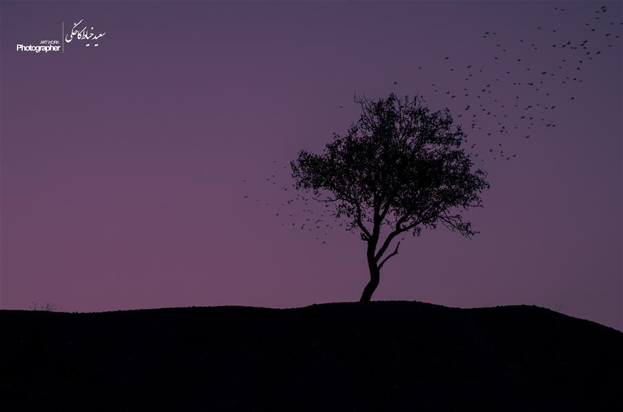 هنر عکاسی محفل عکاسی سعید خیاط کاخکی #درخت #پرنده #غروب #عکاسی