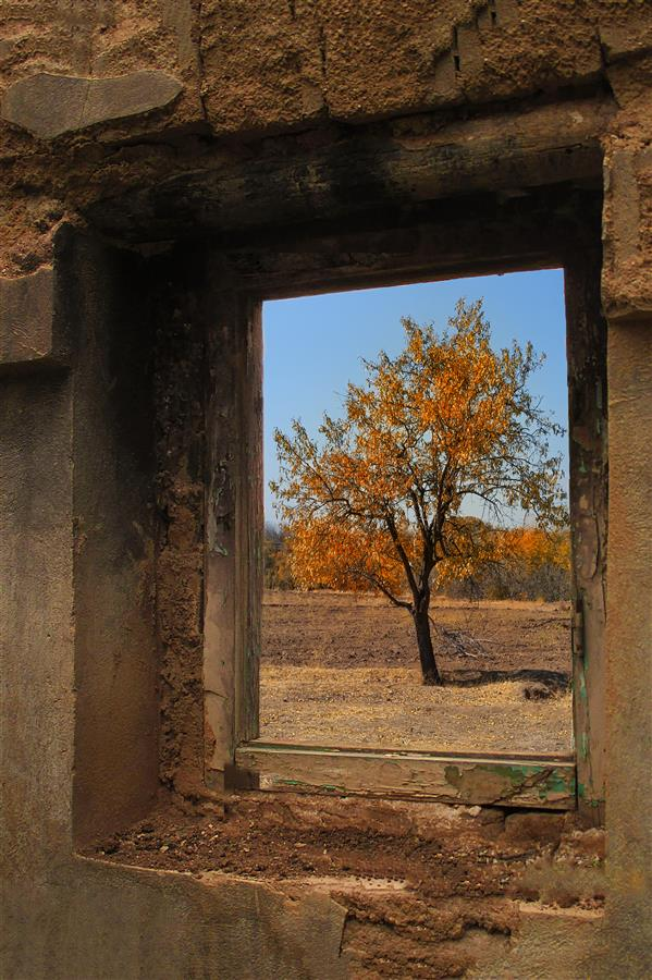 هنر عکاسی محفل عکاسی مصطفی اسدبیگی چهارفصل تویسرکان پاییز  مصطفی اسدبیگی