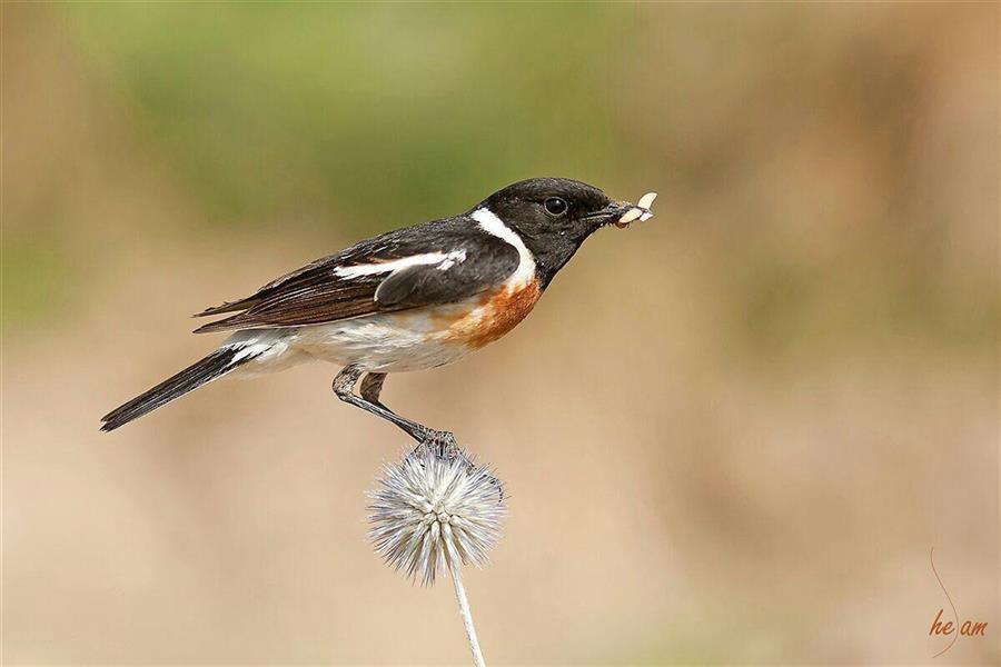 هنر عکاسی محفل عکاسی حسام استوار دره شوری #عکاسی_از_پرندگان #پرندگان_ایران #حسام_استوار #birds_of_iran