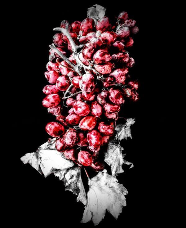 هنر عکاسی محفل عکاسی میثم عظیمی از نشانه های پاییز...تاک...انگور