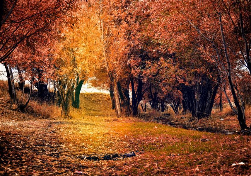 هنر عکاسی محفل عکاسی میثم عظیمی پاییز نارس