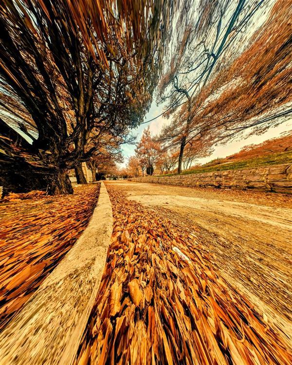 هنر عکاسی محفل عکاسی میثم عظیمی پاییز آشفته