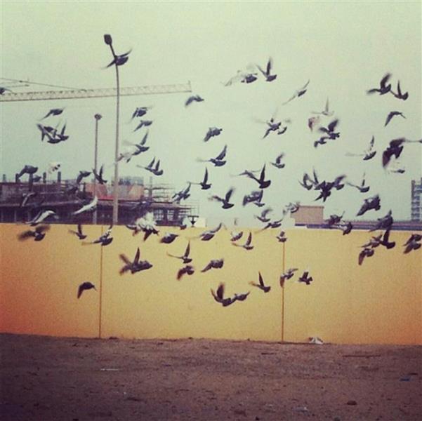 هنر عکاسی محفل عکاسی ابراهیم نوش آذر  صبح زیبای من
