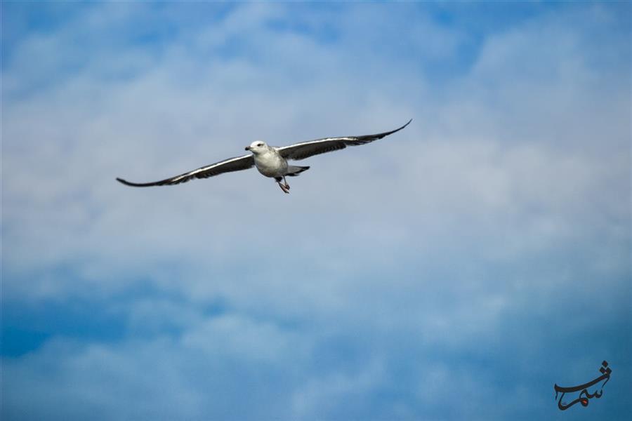 هنر عکاسی محفل عکاسی Alirezashams پرنده