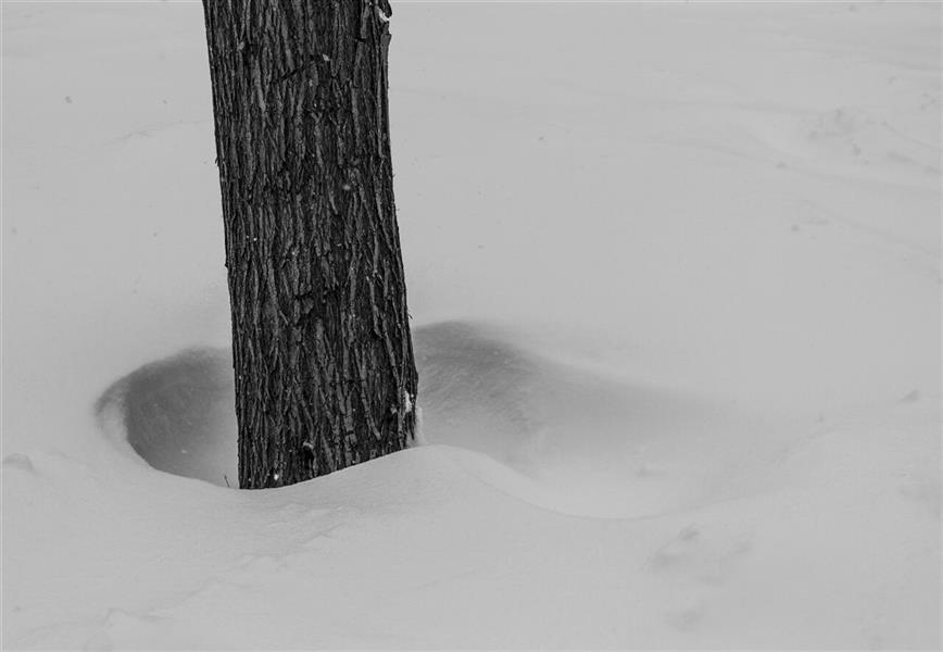هنر عکاسی محفل عکاسی فاطمه فصیحی #برف #مینیمال  #سیاه_و_سفید #black_and_white #درخت
