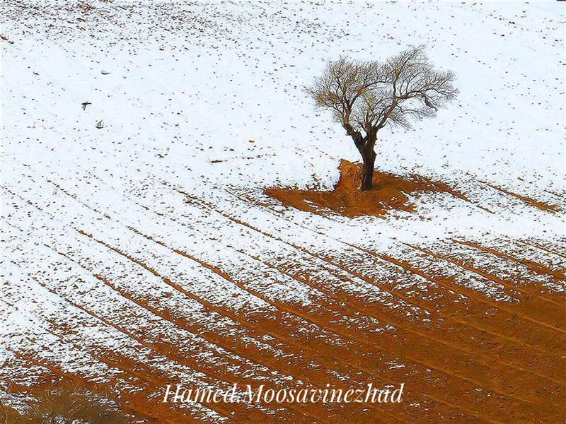 هنر عکاسی محفل عکاسی حامد موسوى نژاد تک درخت در زمستان  #تک_درخت #زمستان #درخت #برف #عکس # عکاسى
