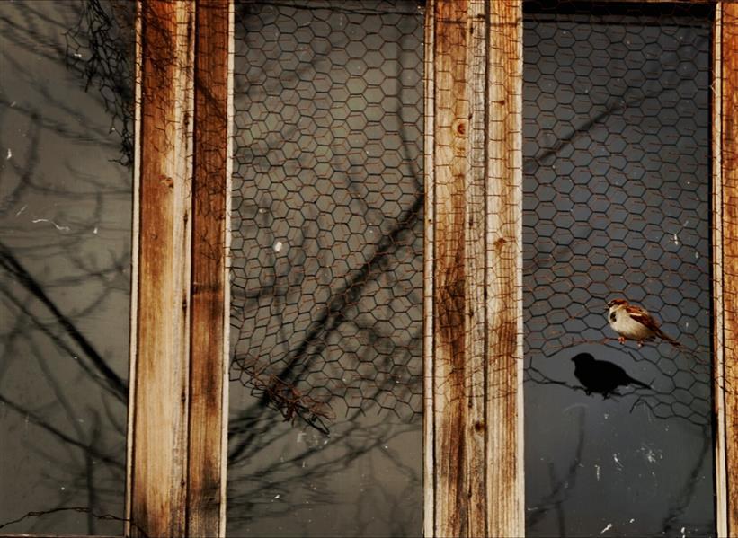 هنر عکاسی محفل عکاسی GilAra Gholamdoust به تو گفتم: «گنجشک ِ کوچک ِ من باش تا در بهار ِ تو من درختی پُرشکوفه شوم.» #شاملو