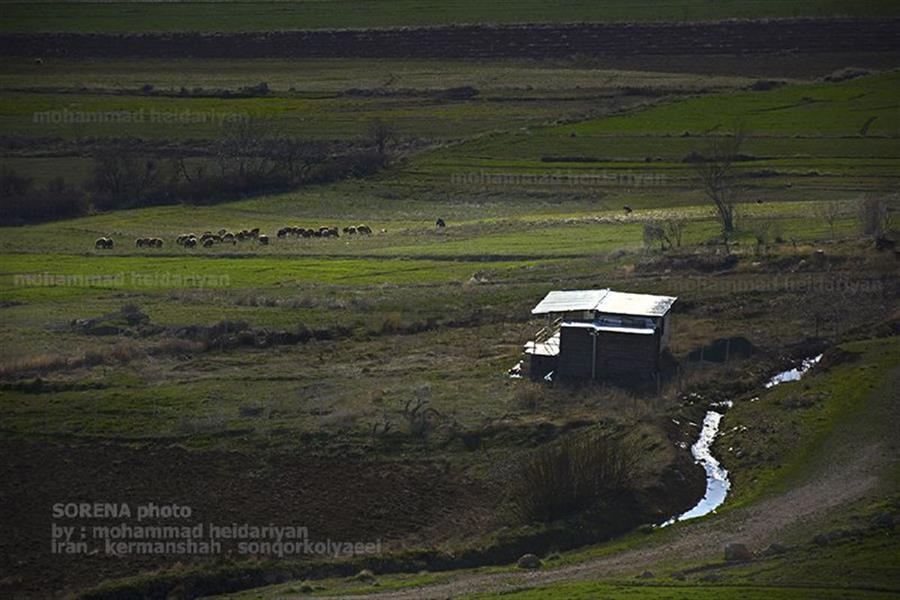هنر عکاسی محفل عکاسی محمدحیدریان کلبه ایی در مسیر رود  کرمانشاه . سنقرکلیایی . محدوده سد گاومیشان