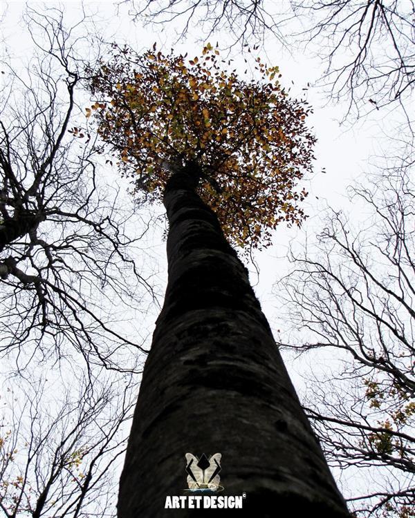 هنر عکاسی محفل عکاسی Art et design Tree ,fall