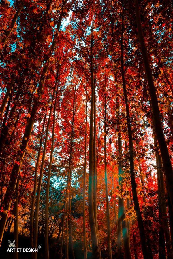 هنر عکاسی محفل عکاسی Art et design Autumn