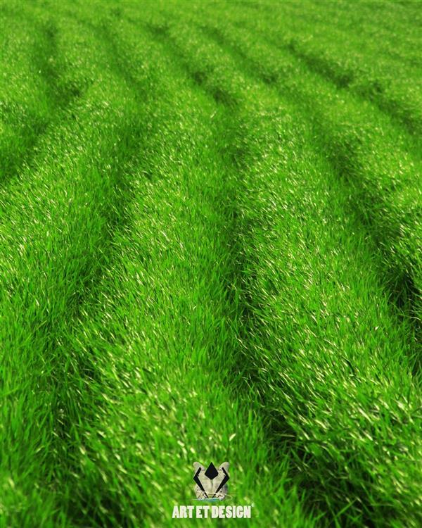 هنر عکاسی محفل عکاسی Art et design Green wheat