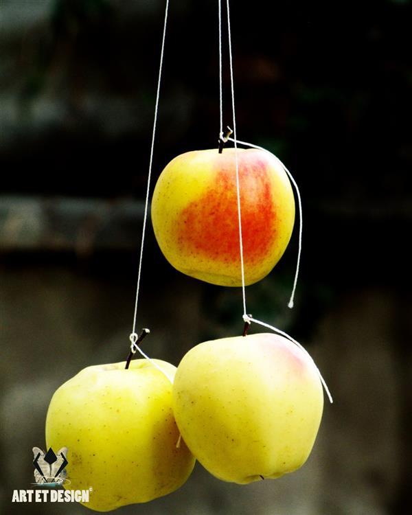 هنر عکاسی محفل عکاسی Art et design Apple yellow red