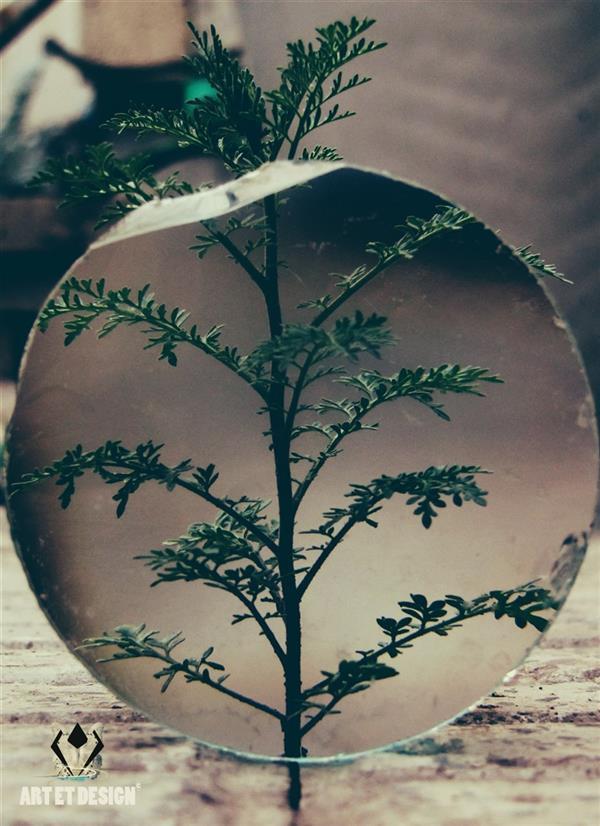 هنر عکاسی محفل عکاسی Art et design Green zoom