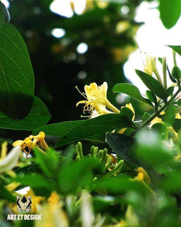 هنر عکاسی محفل عکاسی Art et design White yellow flowers