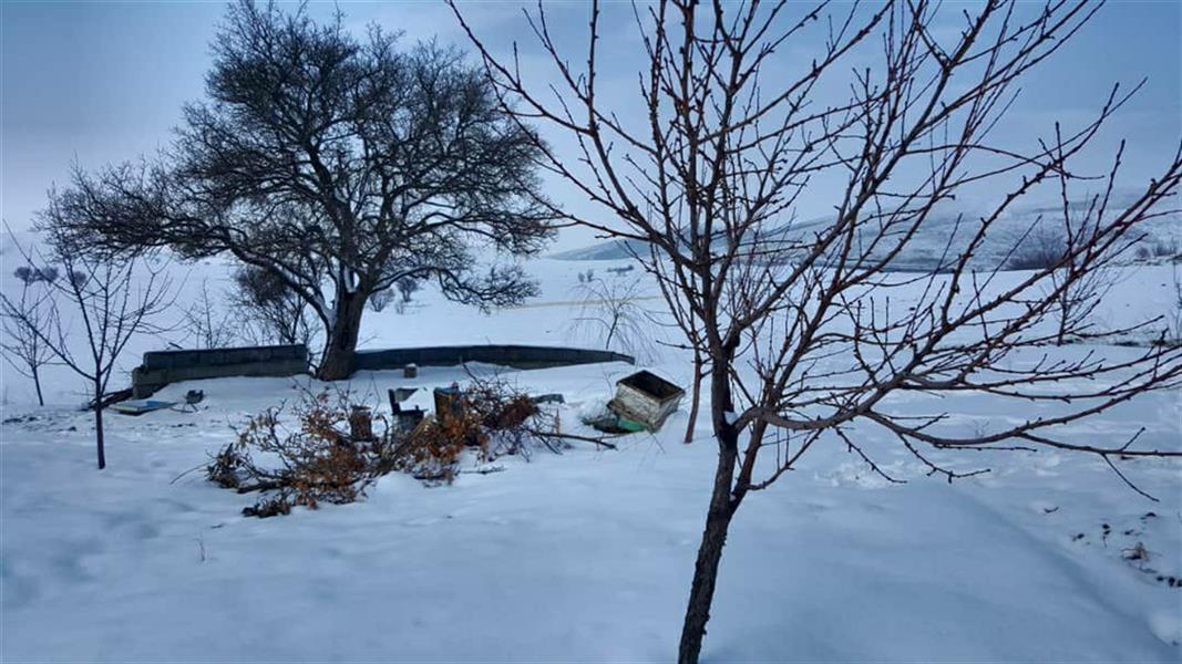 هنر عکاسی محفل عکاسی سهند رستمی عکاسی با گوشی #کردستان#سقز#زمستان