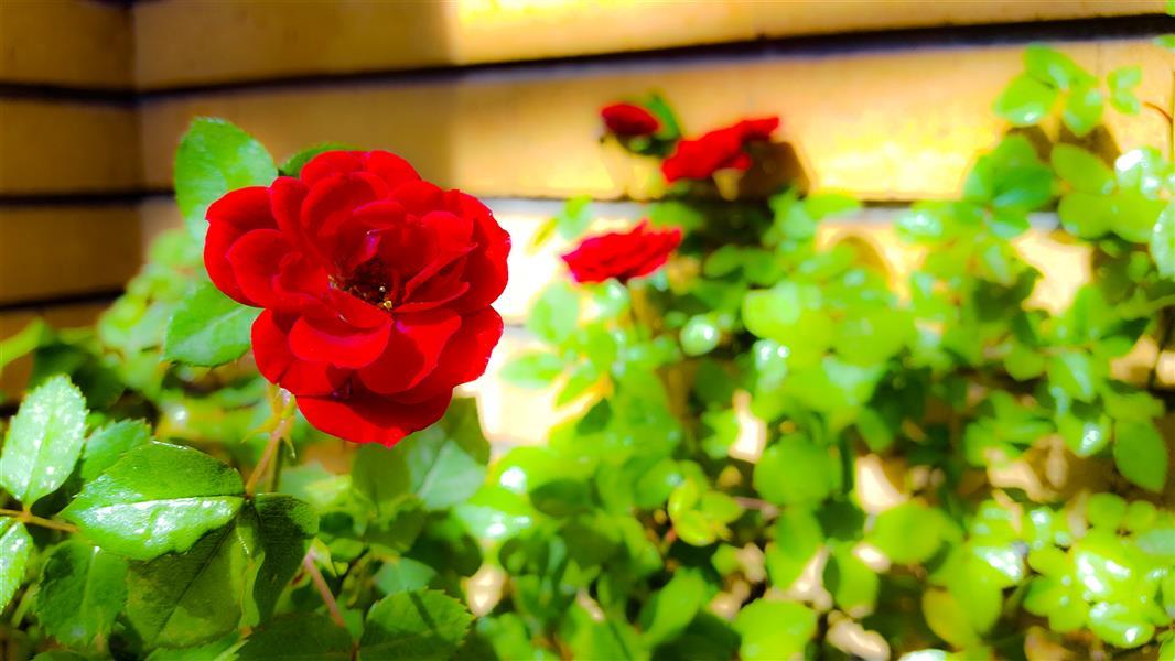 هنر عکاسی محفل عکاسی محمد صحرایی بیرانوند عکاس محمد صحرایی بیرانوند  تابلو شاسی ۱۰۰*۷۰
