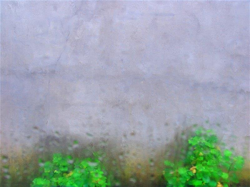 هنر عکاسی محفل عکاسی سهیلا عابدینی روزهای همیشه بارانی شمال #کلکاسرا_رودسر