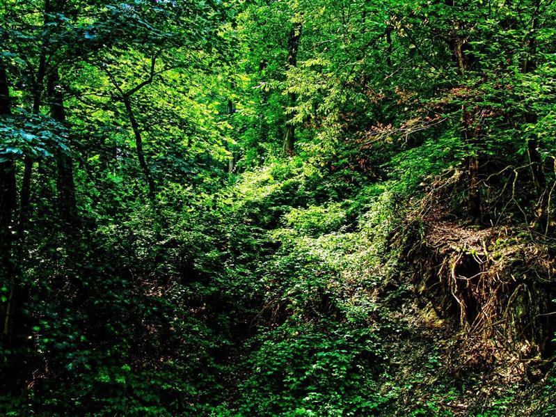 هنر عکاسی محفل عکاسی سهیلا عابدینی سبزِ شمال