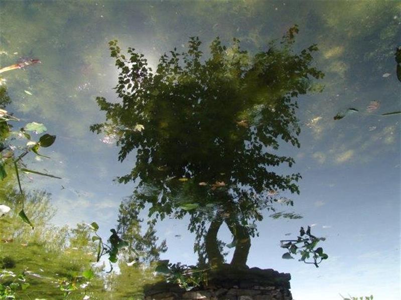 هنر عکاسی محفل عکاسی سهیلا عابدینی درخت شفاف