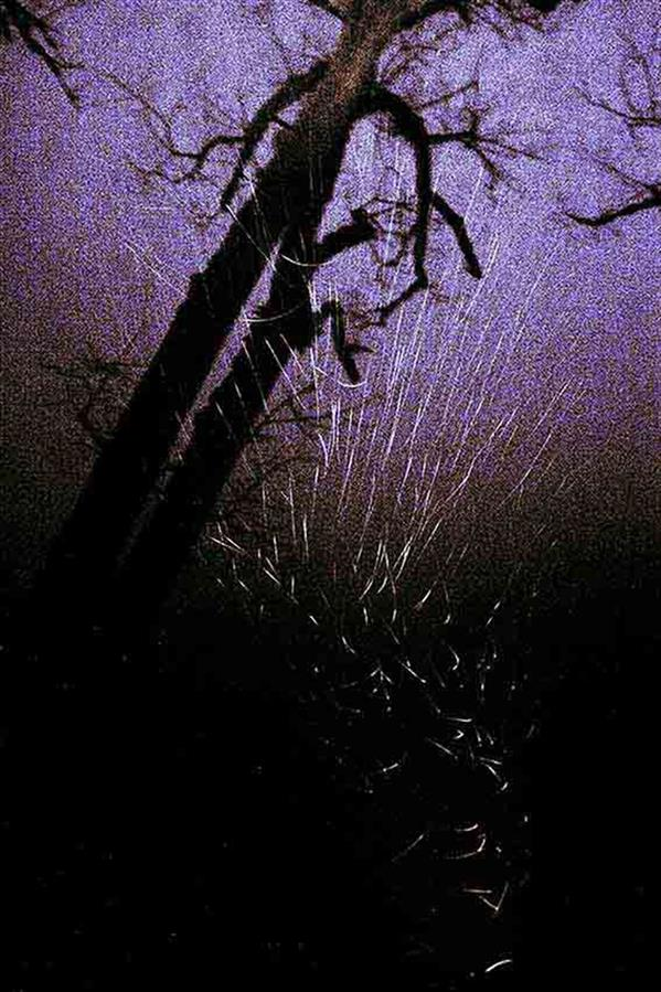 هنر عکاسی محفل عکاسی Tchiya باران با ریتم تند باد، درختان خسته را شلاق می زند .