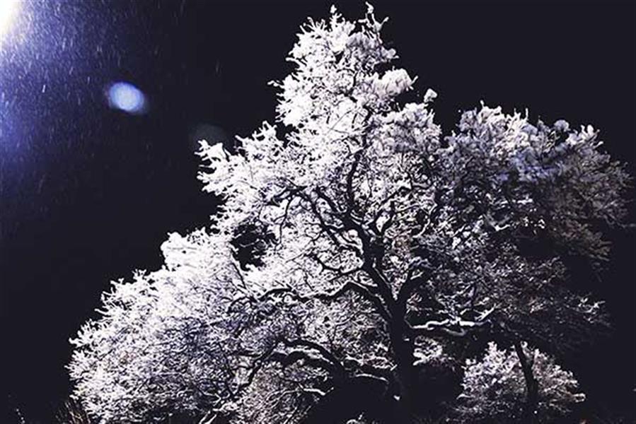 هنر عکاسی محفل عکاسی Tchiya با آغوش باز سمت را برچین، زمستان است.