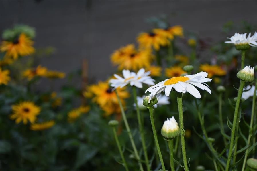 هنر عکاسی محفل عکاسی اکرم ذوالفقاری گلهای باطراوت باغچه