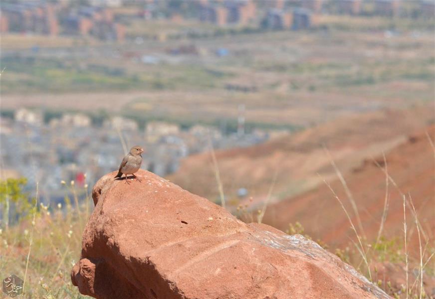 هنر عکاسی محفل عکاسی احمد یاری در این دیار عاشقی ؛ پرنده پر نمیزند