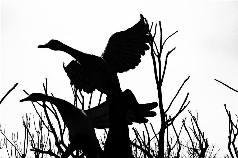هنر عکاسی محفل عکاسی مهدی امیرزاده نام اثر پرواز قوهای سیمانی #پرواز #مینیمال#کانسپچوال