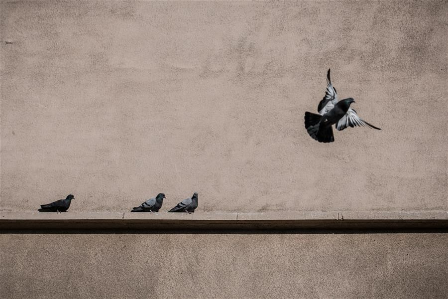 هنر عکاسی محفل عکاسی سروناز یعقوبیان #پرواز_را_بخاطر_بسپار