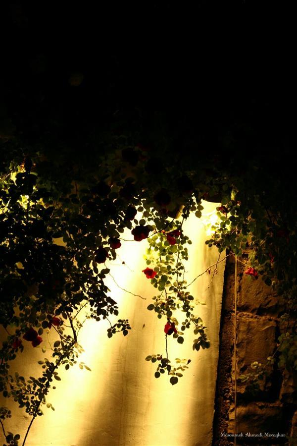 هنر عکاسی محفل عکاسی معصومه احمدی موقر ۵۰ در ۷۰  و طبیعت با شب  (#عکس #عکاسی #شب #پل_طبیعت #تهران)
