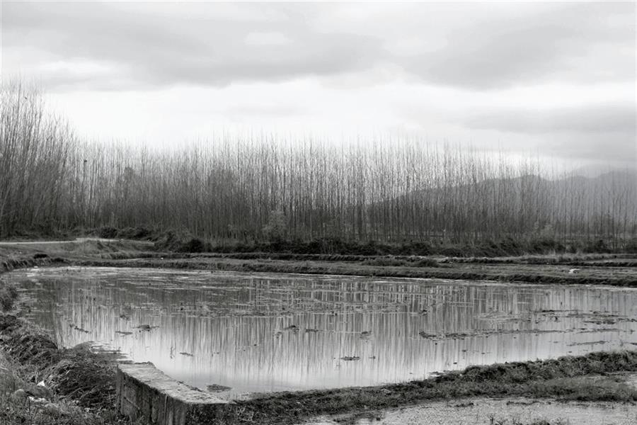 هنر عکاسی محفل عکاسی زهرا موسوی nature Photography