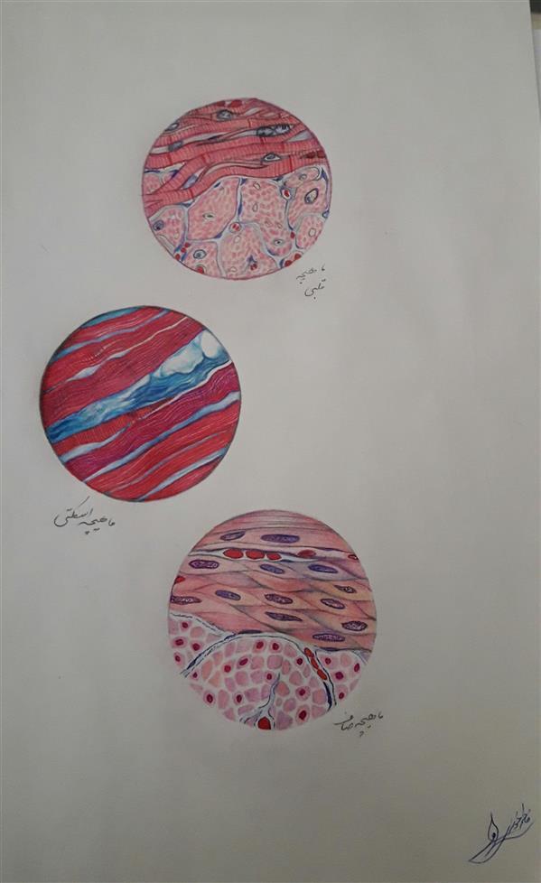 هنر نقاشی و گرافیک محفل نقاشی و گرافیک فاطمه خونمری #زیر میکروسکوپ #مداد رنگی فروخته شد.