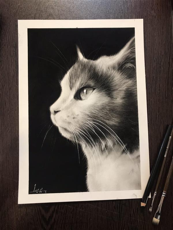 هنر نقاشی و گرافیک محفل نقاشی و گرافیک پریسا بختیارى طراحى عکس گربه خودم لى لى با سیاه قلم #سیاه_قلم#لى_لى