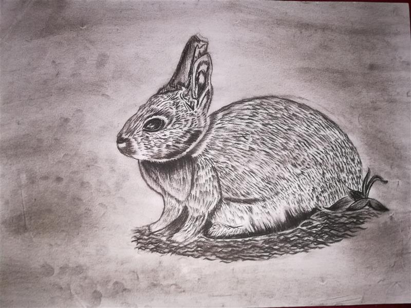 هنر نقاشی و گرافیک محفل نقاشی و گرافیک shaghayegh موضوع#طراحی#خرگوش #تکنیک#سیاه_قلم(کنته)#کاغذ #ابعاد#A3