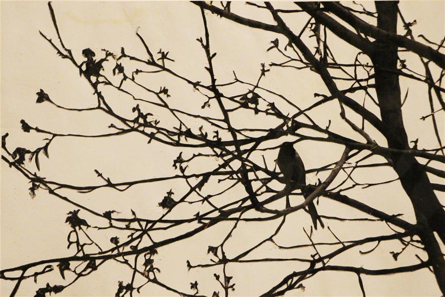 هنر نقاشی و گرافیک محفل نقاشی و گرافیک بهناز ابراهیمی پرنده تکنیک:کنده کاری روی عکس ابعاد:10×15