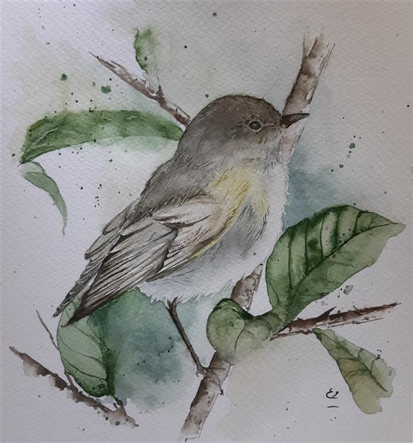 هنر نقاشی و گرافیک محفل نقاشی و گرافیک مریم ابراهیمی جمال #نقاشی #آبرنگ #پرنده ۱۹×۲۱