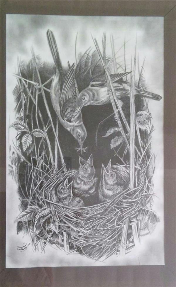 هنر نقاشی و گرافیک محفل نقاشی و گرافیک گلستان نام اثر ،لانه و پرندگان، تکنیک  مداد بی ، سایز حدود ۴۲ در ۳۰