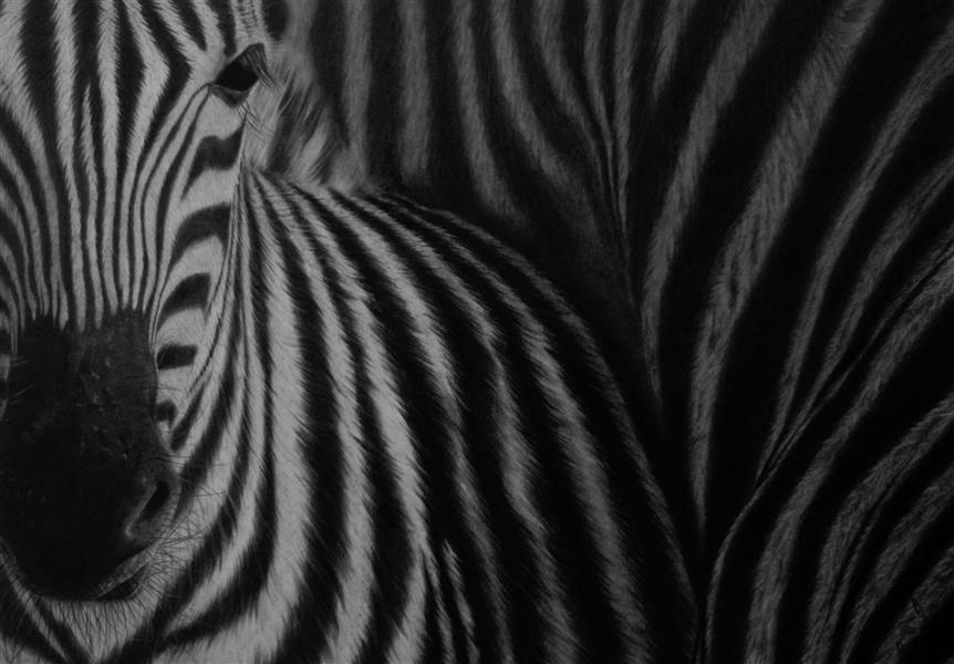 هنر نقاشی و گرافیک محفل نقاشی و گرافیک زهرا صمدی تکنیک سیاه قلم اورجینال   سبک رئال  #کنته، #زغال