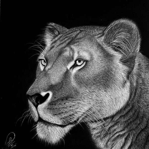 هنر نقاشی و گرافیک محفل نقاشی و گرافیک حسین هلالی #شیر #سیاه_قلم
